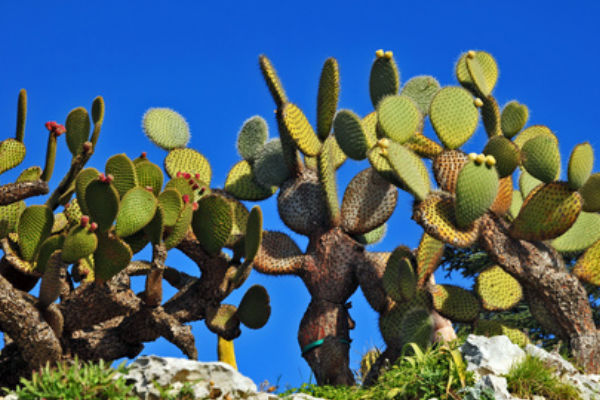 Botanical garden in Calella de Palafrugell